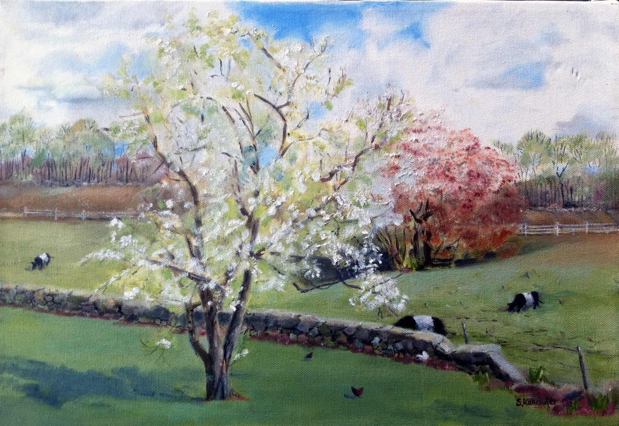 Stillman's Pear tree