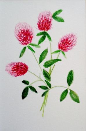 5 x 7 clover w/c